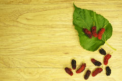 Red and black mulberry with  leaf place on right Stock Images
