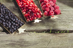 Red and black raspberry and blueberry Stock Photos