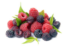 Red and black raspberry with leaves Stock Image