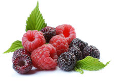 Red and black raspberry with leaves Stock Photos