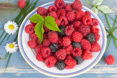 Red and black raspberry Stock Image
