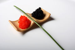 Red and black roe Stock Image