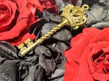 The red and black rose,a golden key. The red and black rose ,golden Queen key Royalty Free Stock Photography