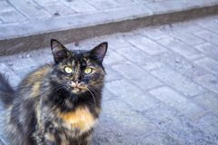 Red and black spotted stray cat on the grey pavement royalty free stock image