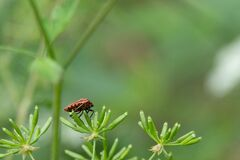 Red and black striped bug on a green plant