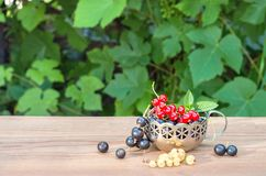 Red, black, white currant in the German silver mug on the table Stock Images