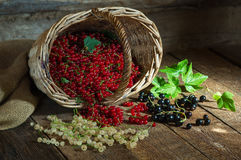 Red, black and white currant on a wooden surface stock image