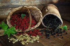 Red, black and white currant on a wooden surface Stock Photos