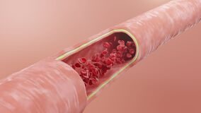 Red blood cells flow inside an artery, vein. Healthy arterial cross-section blood flow. Scientific and medical