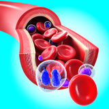 Red blood cells flowing through a vein and artery Royalty Free Stock Image