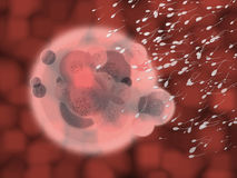 Red Blood Organic Body Cell with Sperm Stock Images
