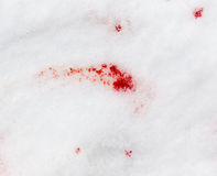 Red blood on the snow Royalty Free Stock Photo