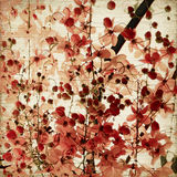 Red blossom background Stock Image