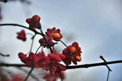 Red, Blossom, Branch, Flora Royalty Free Stock Images