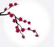 Red blossom Stock Photos