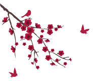 Red blossom Royalty Free Stock Images