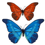Red and blue beautiful butterfly, vector insect Stock Photos