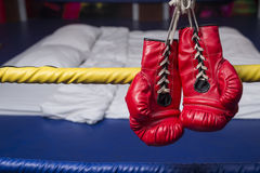 Red & Blue boxing gloves Royalty Free Stock Photography