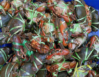 Red , blue crabs in a bucket Stock Images