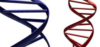 Red and blue Dna abstract. Abstract dna isolated on a white background Stock Photo