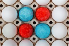 Red and blue easter eggs among white chicken eggs in cardboard tray closeup. Top view Stock Image