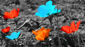 Red and blue flowers on gray background Royalty Free Stock Photos