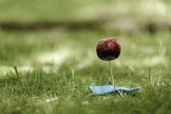 Red and Blue Lollipop on Green Textile Surrounded by Green Grass stock images