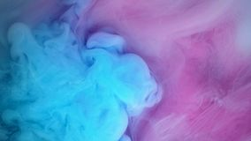 Red and blue paint forming thick, inky pink, blue and purple clouds. In clear water against a white background stock video footage