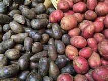 Red and blue potatoes Royalty Free Stock Photography