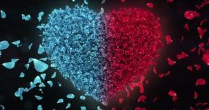 Red Blue Rose Falling Flower Petals In Lovely Heart Shape Background Loop 4k stock video