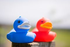 Red and blue rubber ducks royalty free stock images