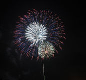 Red, Blue, and White Fireworks Royalty Free Stock Image