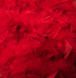 Red boa feathers. Soft red boa feathers background Royalty Free Stock Image