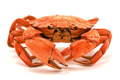 Red boiled crab. Isolated on white background Stock Image