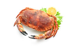 Red boiled crab Royalty Free Stock Photography