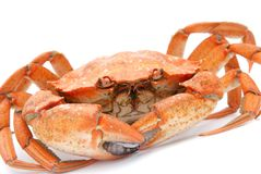 Red boiled crab isolated on white background Royalty Free Stock Images