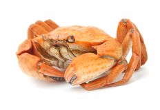Red boiled crab isolated on white background Stock Photo