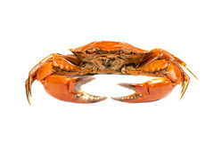Red boiled crab isolated on white background Stock Photos