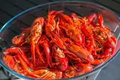 Red boiled crawfish in clear glass bowl Royalty Free Stock Images