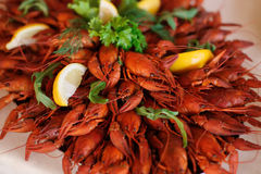 Red boiled crawfish with lemon close up. Red boiled crawfish with lemon Stock Photo