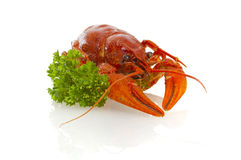 Red boiled crawfish with parsley Royalty Free Stock Images