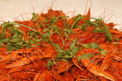 Red boiled crawfish Royalty Free Stock Photography