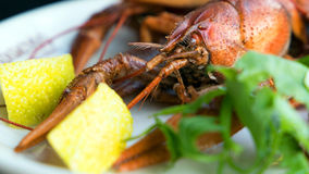 Red boiled crawfish on a plate with lemon Royalty Free Stock Image