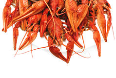 Red boiled crawfish on a white background. Appetizing red boiled crawfish on a white background Stock Images