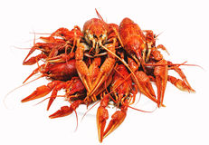 Red boiled crawfish on a white background. Appetizing red boiled crawfish on a white background Royalty Free Stock Photos