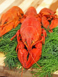 Red boiled crawfishes and green fennel.Closeup. Stock Photos