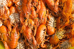 Red boiled crayfish Royalty Free Stock Photography