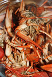 Red boiled crayfish. Close-up background Stock Image