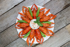 Red boiled crayfish and herbs with white sauce Stock Image