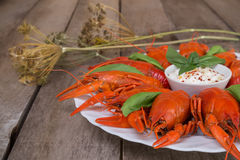 Red boiled crayfish and herbs with white sauce Royalty Free Stock Photos